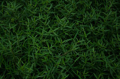 Grashintergrund, Gras Stockbild