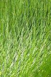 Grashintergrund und -beschaffenheit lizenzfreies stockbild