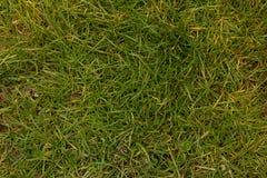 Grashintergrund von der Draufsicht Stockfoto