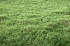 grasland stockfotos