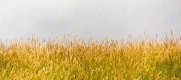 grasland Stockfoto
