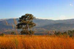 grasland Stockbilder