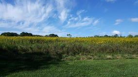 grasland Stockbild