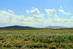 Grasland-Ansicht an einem sonnigen Tag Stockbilder