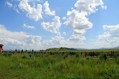 Grasland-Ansicht an einem sonnigen Tag Stockbild