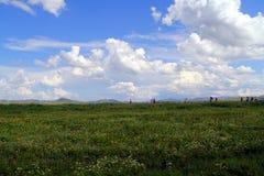 Grasland-Ansicht an einem sonnigen Tag Lizenzfreies Stockbild