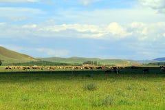 Grasland-Ansicht an einem sonnigen Tag Lizenzfreie Stockfotos