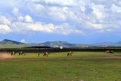 Grasland-Ansicht an einem sonnigen Tag Lizenzfreie Stockbilder
