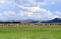 Grasland-Ansicht an einem sonnigen Tag Stockfotos