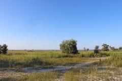 Grasland auf der unbewohnten Insel Lizenzfreie Stockbilder