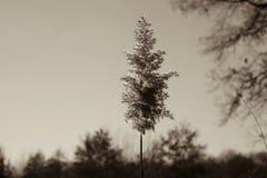 Grasland Fall Ojibway Tallgrass Lizenzfreie Stockfotografie