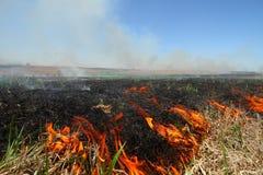 Grasland-Feuer stockbilder