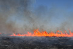Grasland-Feuer Lizenzfreies Stockfoto