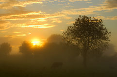 Grasland im Sonnenaufgang Lizenzfreie Stockfotografie
