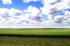 Grasland-Landschaft Stockbilder