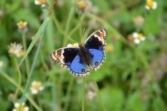 Grasland mit Schmetterling Stockfoto