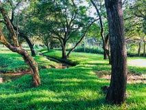 Grasland onder bomen waar een kleine waterweg stroomt royalty-vrije stock fotografie