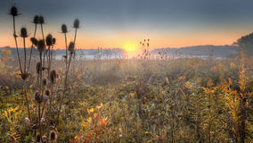 Grasland-Sonnenaufgang Lizenzfreie Stockfotos