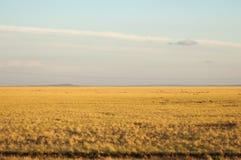 grasland und Larga-offenes Gebiet von-d grassland, Lizenzfreies Stockfoto