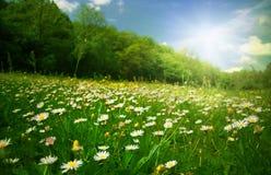Grasland unter der Sonne Lizenzfreie Stockfotografie