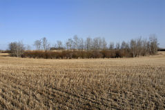 Grasland von Kanada Stockfoto