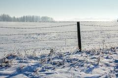 Grasland-Winter lizenzfreie stockbilder