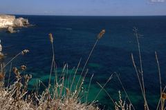 Graslandgras auf dem Hintergrund des Meeres Stockfotografie