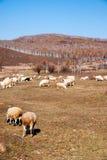 Graslandherbst von China Stockbilder