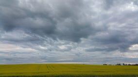 Graslandhimmel Stockbilder