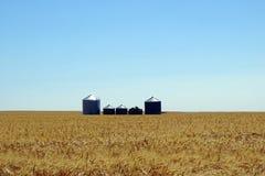 Graslandlandschaft stockfotografie
