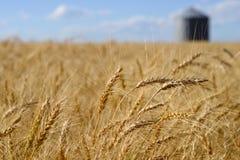 Graslandlandschaft lizenzfreies stockbild