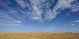 Graslandlandschaft lizenzfreie stockfotos