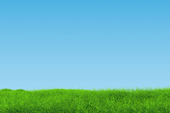 Graslandschaft Stockbild
