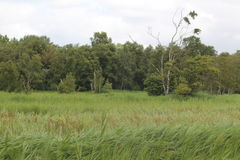 Graslandschap Stock Afbeelding