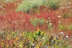 Graslandvegetation chalten stockfotos