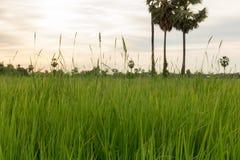Graslandwind und -Spontaneität Stockfotografie