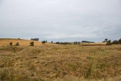 Graslebensraum an einem kalten Tag Stockbilder