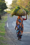 Grasmähmaschinefrau in Indien Lizenzfreies Stockfoto
