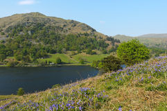 Grasmere Lake. In Lake District National Park England Royalty Free Stock Images