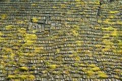 Grasmoos auf hölzernem Dachhintergrund Stockbilder
