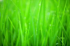 Grasnahaufnahme Lizenzfreie Stockbilder