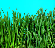 Grasnahaufnahme Stockfotos