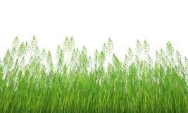 Gras vektor abbildung