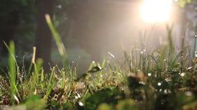 Grasrecht nach einem Morgenregen stock video footage