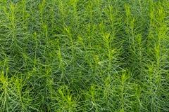 Grasrijk Fern Bushy Background Stock Afbeeldingen