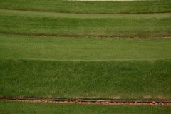 Grasrijk gazon Stock Afbeeldingen