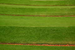 Grasrijk gazon Stock Foto