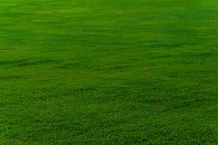 Grasrijk groen gebied Stock Afbeelding