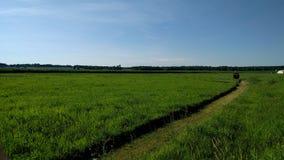 Grasrijk land Stock Foto's