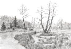 Grasrijk moeras met stroom en bomen royalty-vrije stock foto's